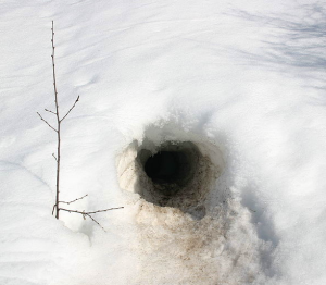 Snow Den in Winter